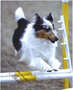 Queen City Dog Training Cincinnati
